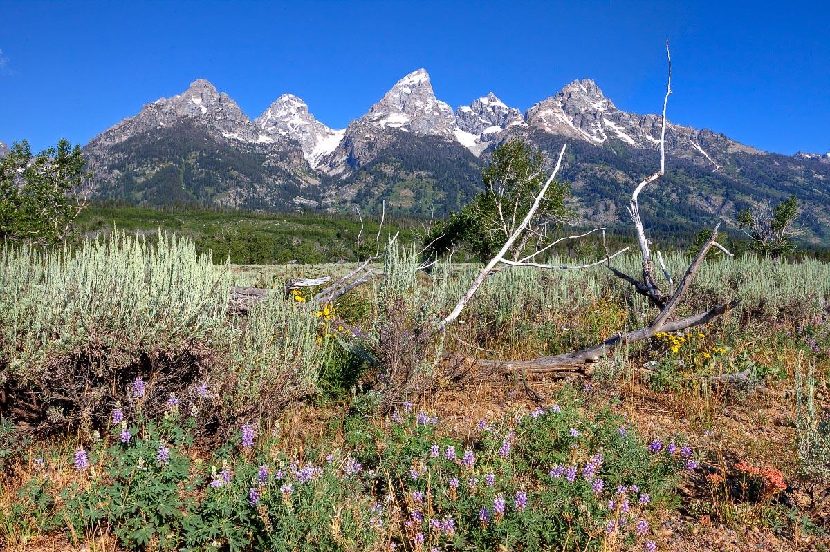 Wyoming blog