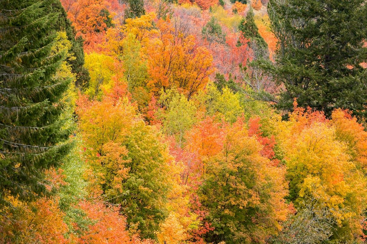 Snake River Canyon fall colors Wyoming
