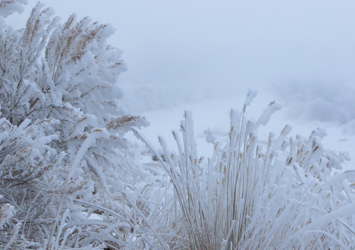 Riverside grasses and Sagebrush hoarfrost