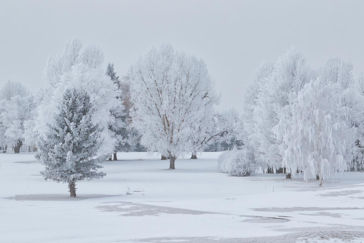 Golf course hoarfrost
