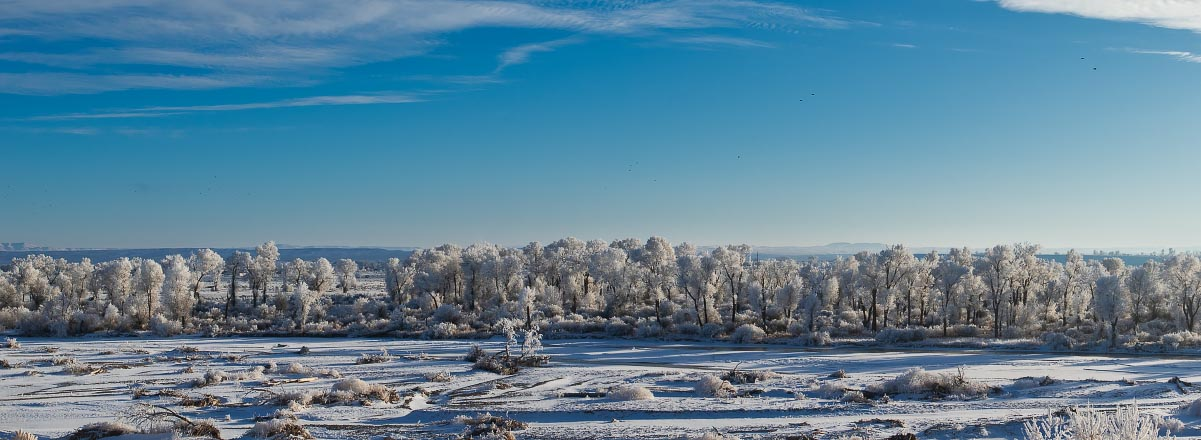 Wind River hoarfrost pano