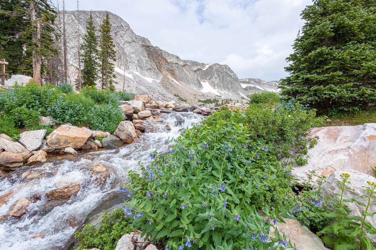 Mountain Bluebells Lake Marie Falls Wyoming
