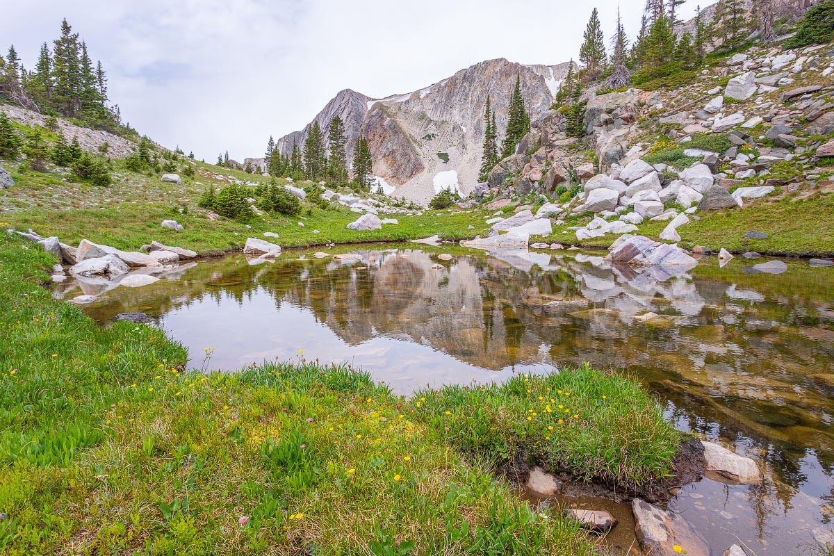 Subalpine Meadow Snowy Range Wyoming