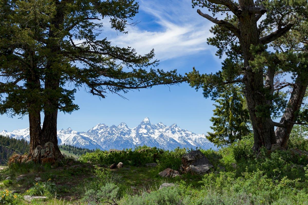 Wedding Trees Wyoming