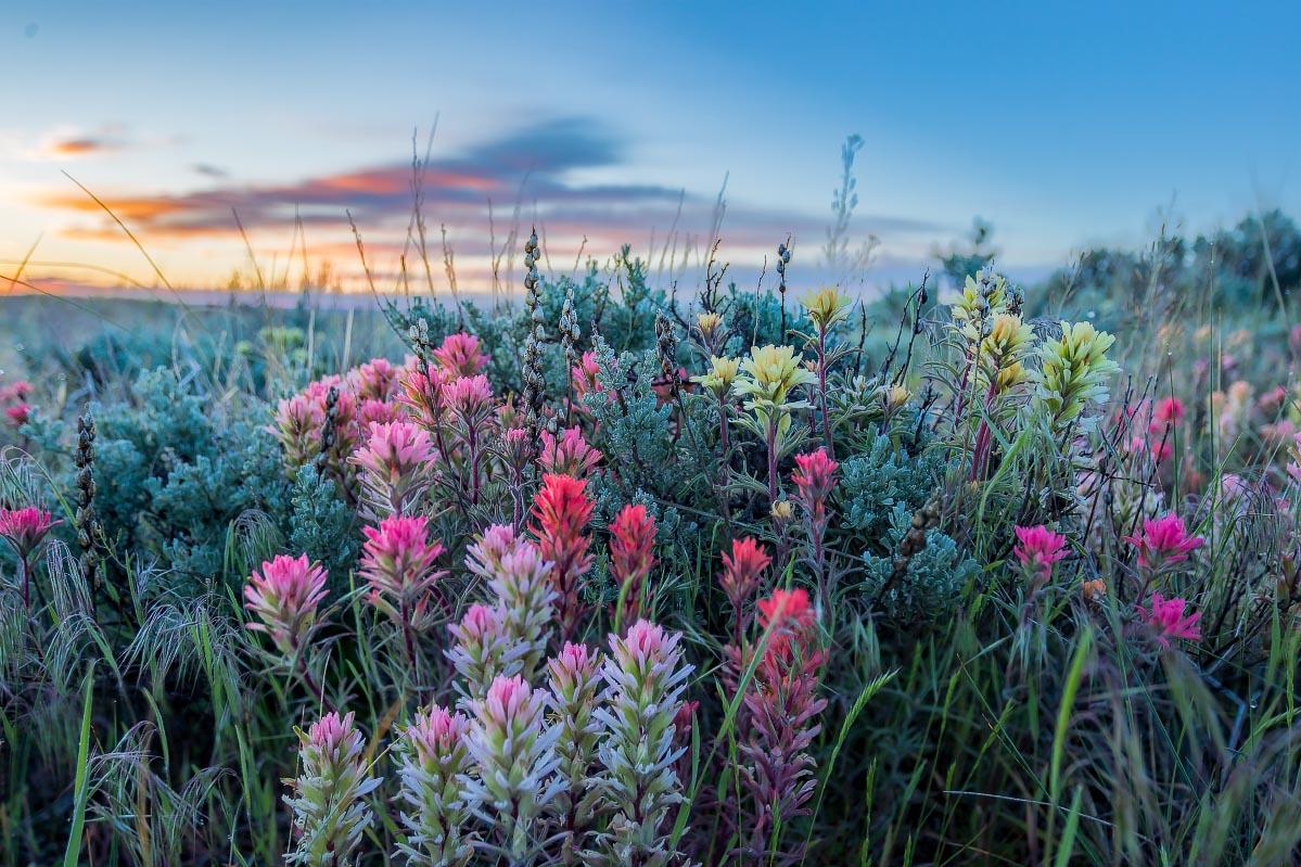 Paintbrush Wyoming